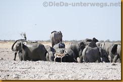 Namibia1078