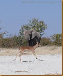Namibia1123