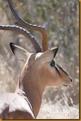 Namibia1147