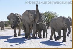 Namibia1191