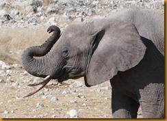 Namibia1268