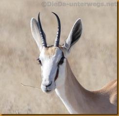 Namibia1288