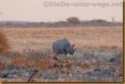 Namibia1316