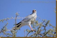 Namibia1522