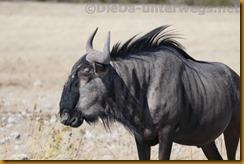 Namibia1532