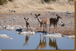 Namibia1569