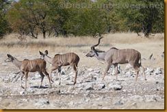 Namibia1605