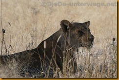 Namibia1616
