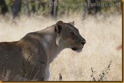 Namibia1627