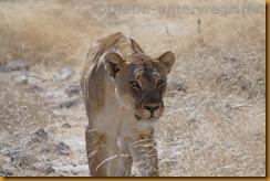 Namibia1644