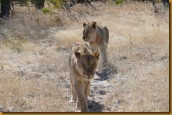 Namibia1648