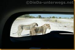 Namibia1653