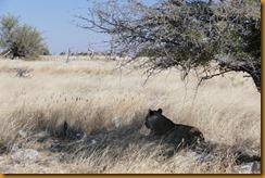 Namibia1667