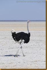 Namibia1783