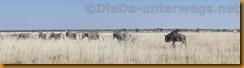 Namibia1837