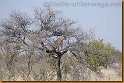 Namibia1839