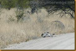Namibia1864