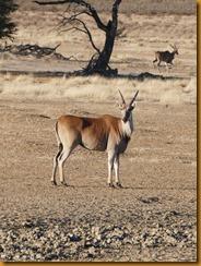 Botsuana0126