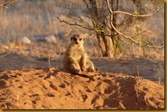 Südafrika0146_thumb