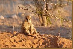 Südafrika0147_thumb