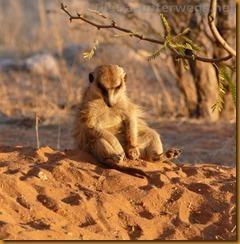 Südafrika0148_thumb