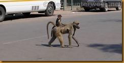 Simbabwe0153
