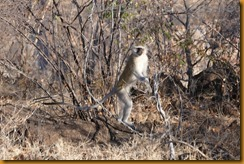 Simbabwe0222