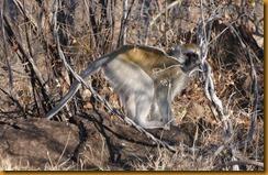Simbabwe0223