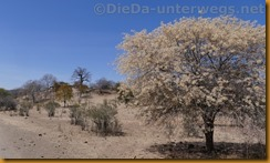 Simbabwe0355