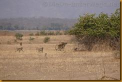 Simbabwe0555