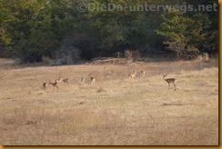 Simbabwe0573