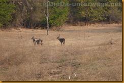 Simbabwe0574