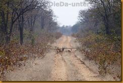 Simbabwe0765