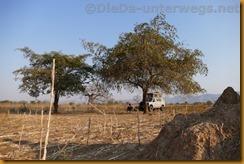 Simbabwe0803