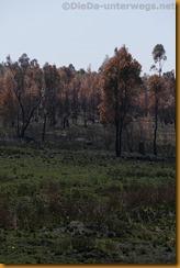Simbabwe1133