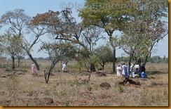 Simbabwe1237
