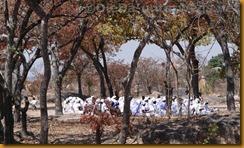 Simbabwe1245