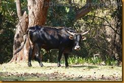 Simbabwe1640