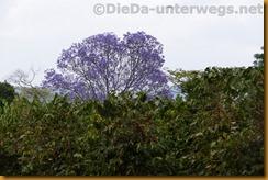 Simbabwe2061