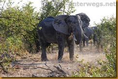 Simbabwe2333