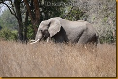 Simbabwe2397
