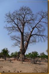 Simbabwe2401