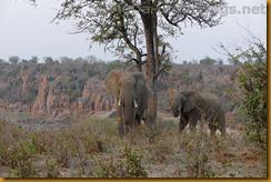 Simbabwe2611