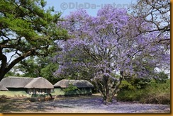 Simbabwe2706