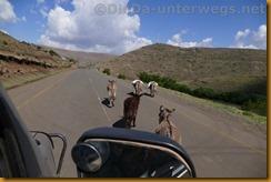 Lesotho0292