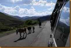 Lesotho0293