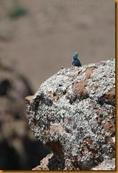 Lesotho0399