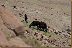 Lesotho0416