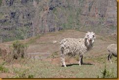 Lesotho0459