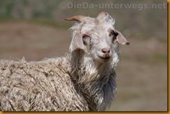 Lesotho0466